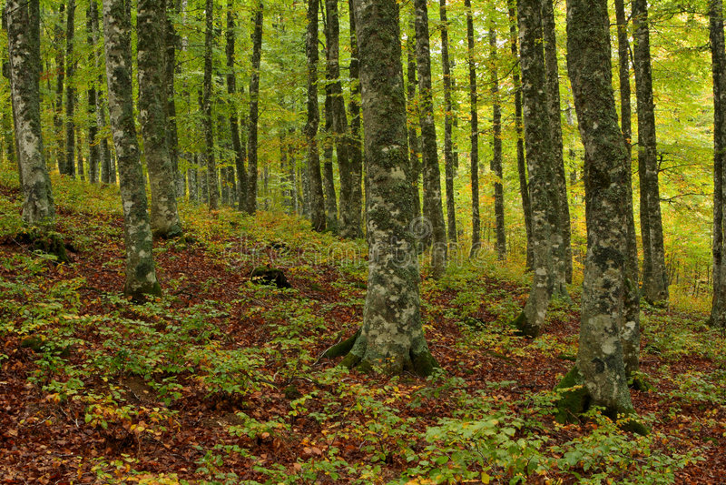 Farben im Herbst stockfoto