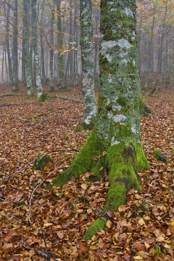 Farben im nebeligen Herbst stockbild