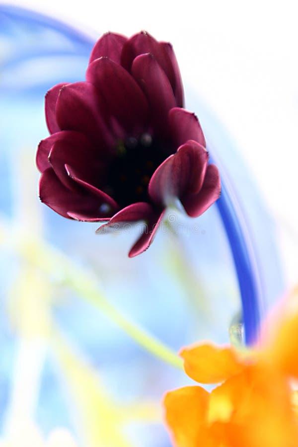 Farben und Blumen stockfotos