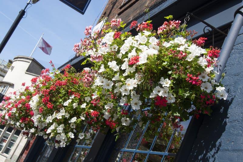 Farbenfrohe Außenblumen in Töpfen am Fenster. London, U. K lizenzfreie stockbilder