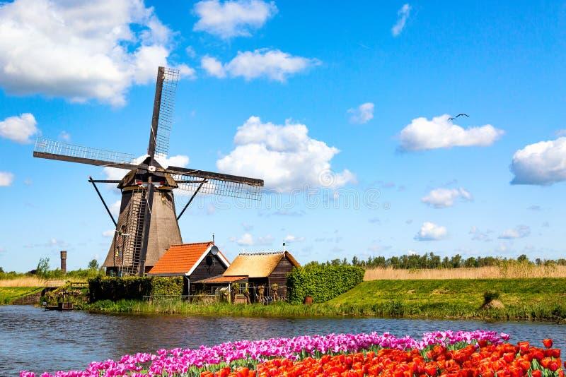 Farbenfrohe Frühlingslandschaft in den Niederlanden, Europa Berühmte Windmühlen im Dorf Kinderdijk mit Tulpenblumen, eingepflanzt lizenzfreies stockfoto