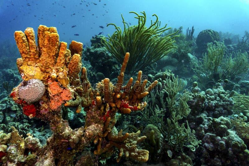 Farbenfrohe tropische Korallen lizenzfreie stockfotos