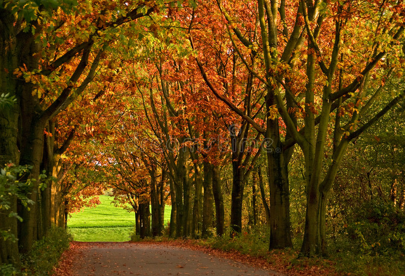 Farbige Bäume stockfotos