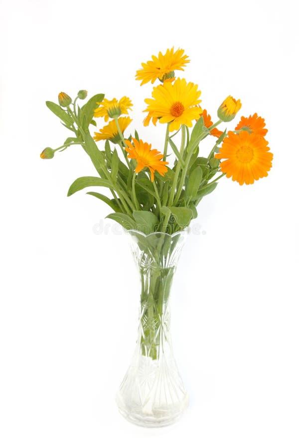 Farbige Blumen stockfotografie