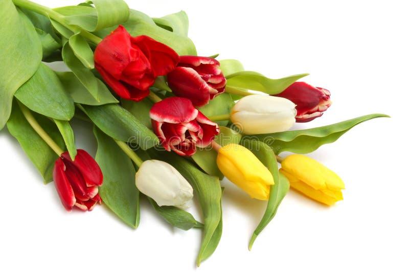 Farbige Frühlingstulpen stockfotos