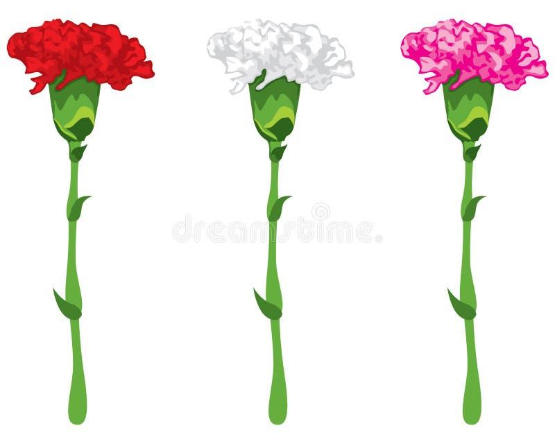 Farbige Gartennelken vektor abbildung