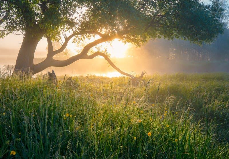 Farbige handgemachte Abbildung Nebelhafter Morgen Schönes ruhiges Morgen landsca stockfotos