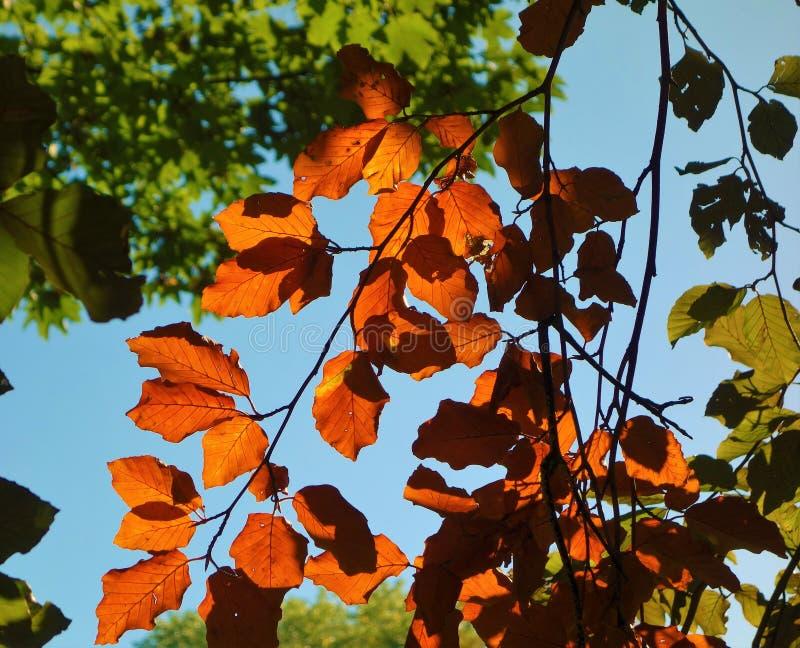 Farbige Herbstblätter stockbild