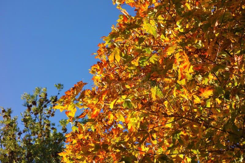 Farbige Herbstblätter lizenzfreie stockfotografie