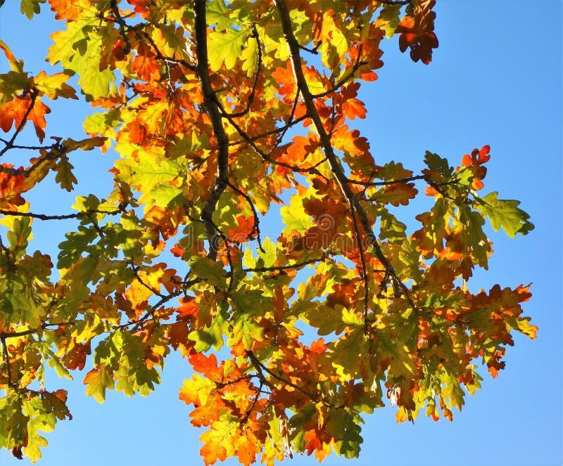 Farbige Herbstblätter lizenzfreies stockfoto