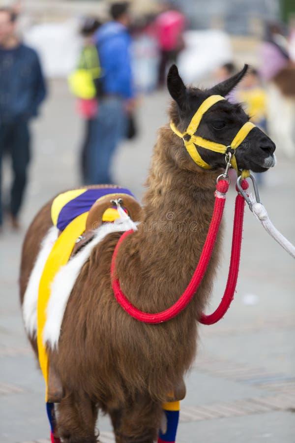 Farbige Seile und Lama, die in Bolivar-Piazza in Bogota steht lizenzfreie stockbilder