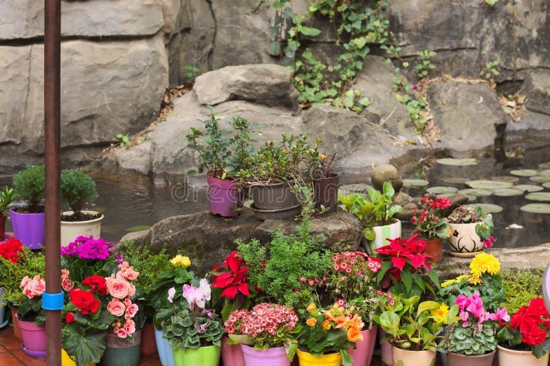 Farbige Vasen mit Blumen auf dem Felsen lizenzfreies stockfoto