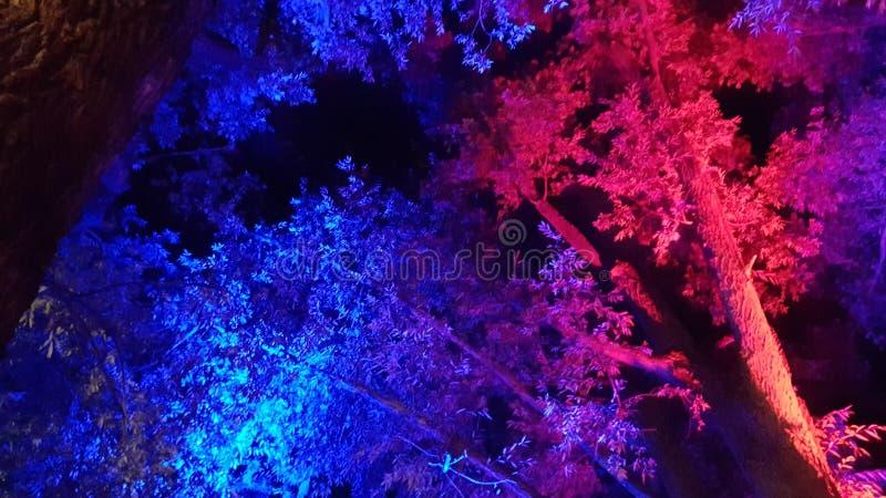 Farbiger Abend stockbilder