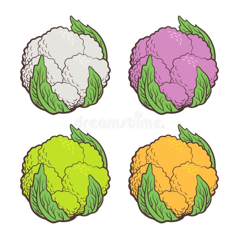 Farbiger Blumenkohl lizenzfreie abbildung
