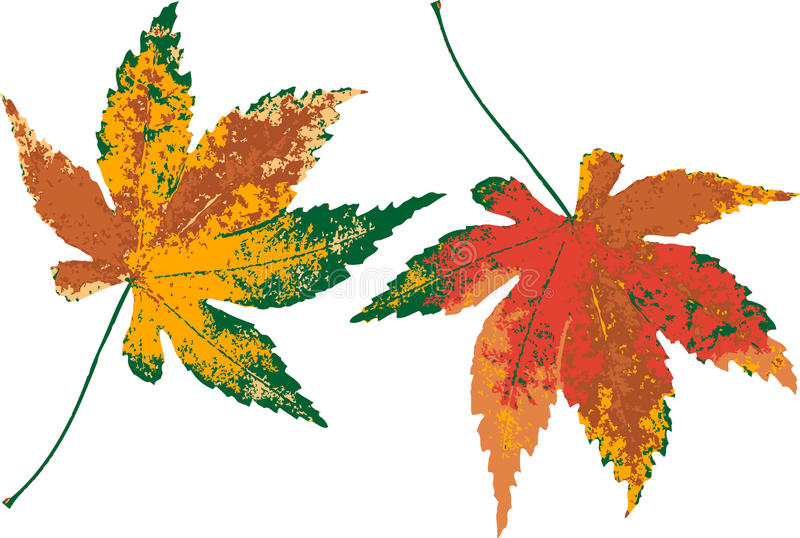 Farbiges Blatt des Herbstes. vektor abbildung