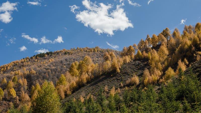Farbiges Holz stockfotografie