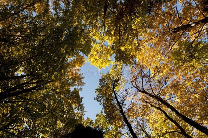 Farbiges Laub des Falles Herbst Wald lizenzfreie stockfotos
