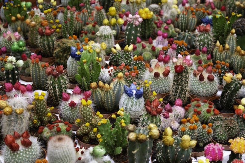 Farbkaktusmarkt stockbilder