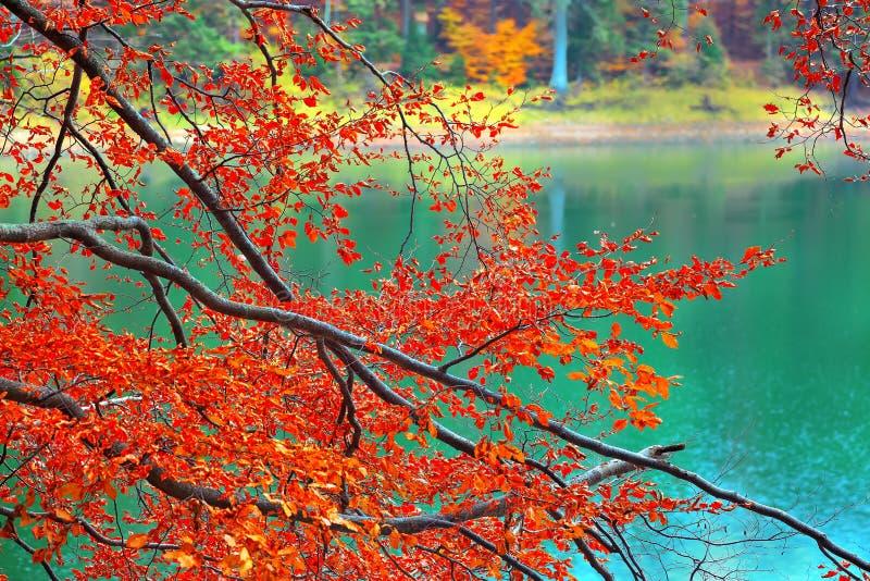 Farbniederlassungen von Bäumen im Herbst lizenzfreie stockfotografie