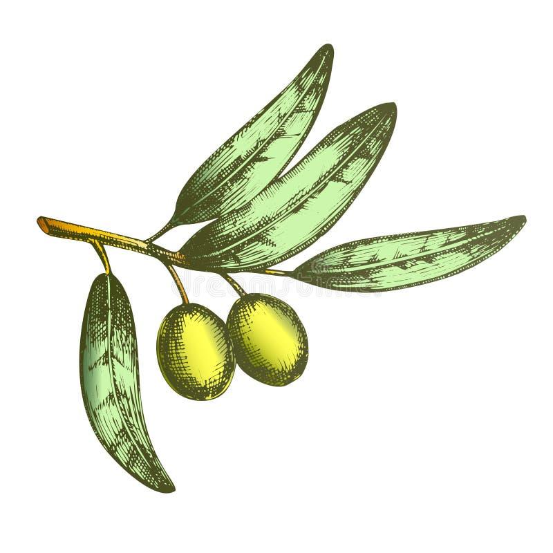 Farbsymbol des Friedens Olive Branch Hand Drawn Vector stock abbildung