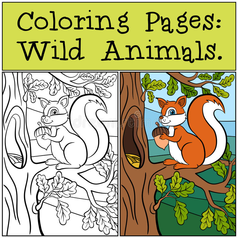 Farbton-Seiten: Wilde Tiere Kleines nettes Eichhörnchen lizenzfreie abbildung