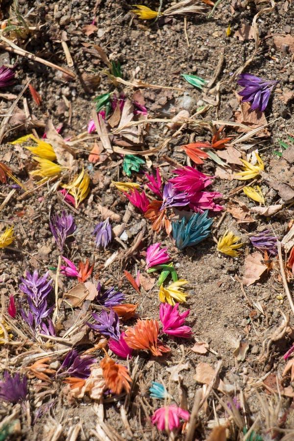 Farbujący kolorowi kwiaty na ziemi ziemi zdjęcie stock