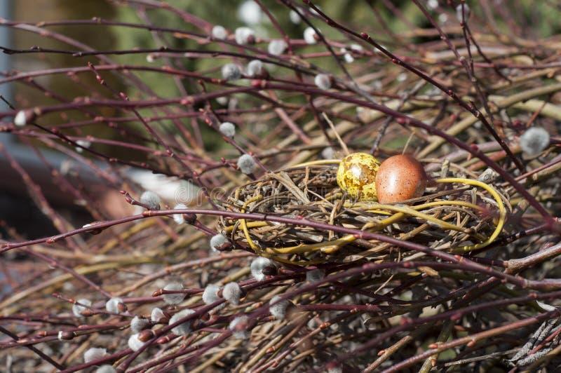 Farbujący przepiórek jajka w gniazdeczku na wierzbowych gałąź zdjęcia royalty free