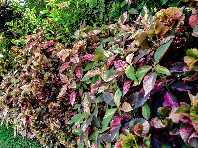 Farbvolle Anlage im Garten, lizenzfreies stockbild