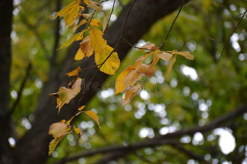 Farby jesień park fotografia royalty free
