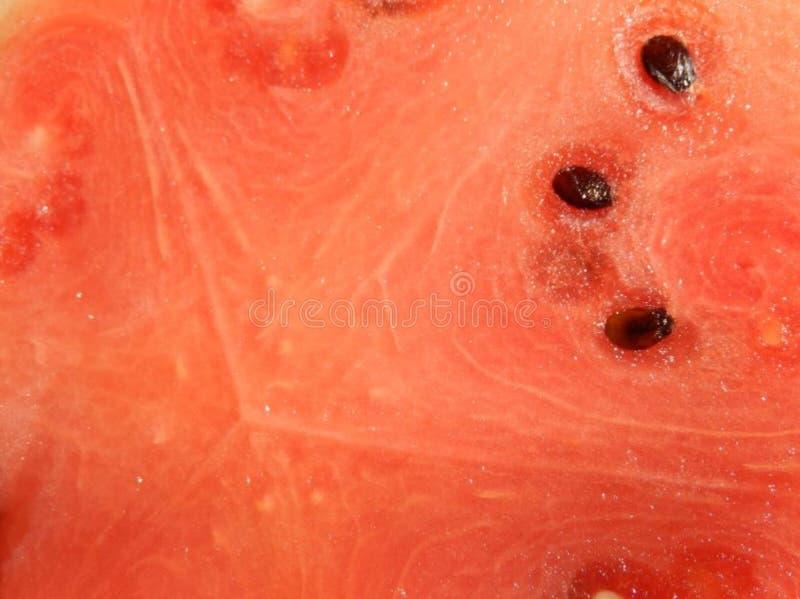 fard à joues - intérieur d' ; pastèque d'une image libre de droits