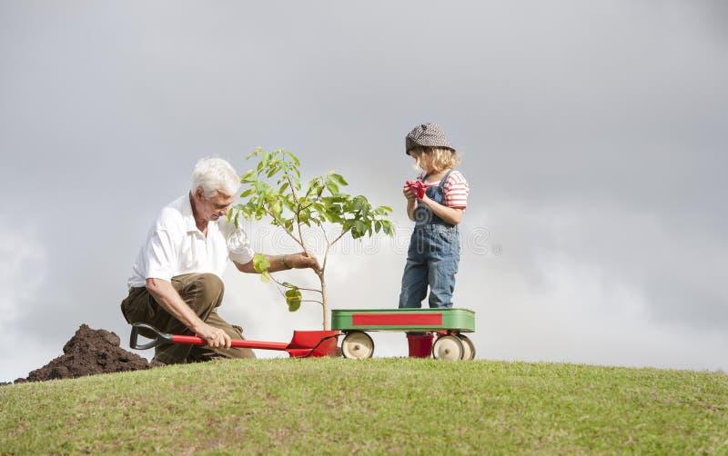 Farfadern och barnet som planterar trädet parkerar in, familjsamhörighetskänsla arkivfoton
