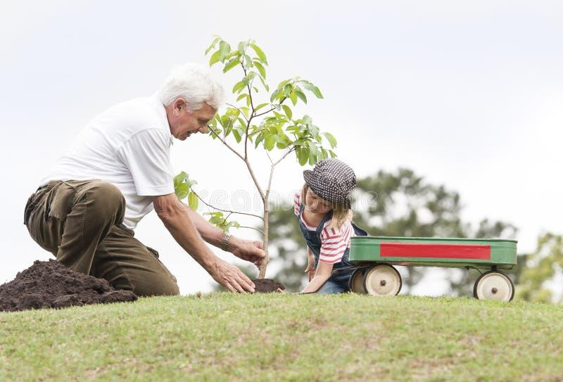 Farfadern och barnet som planterar trädet parkerar in, familjsamhörighetskänsla royaltyfri foto