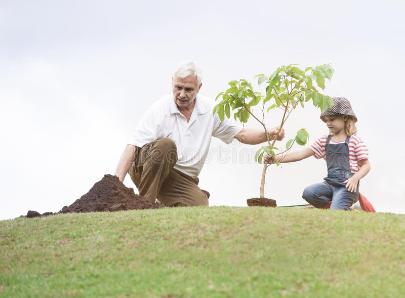Farfadern och barnet som planterar trädet parkerar in, familjsamhörighetskänsla royaltyfri fotografi
