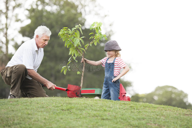 Farfadern och barnet som planterar trädet parkerar in, familjsamhörighetskänsla arkivbilder