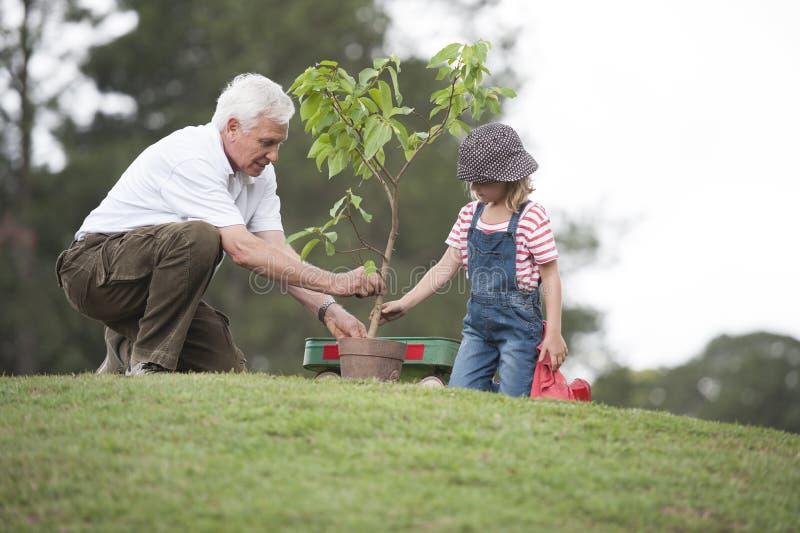 Farfadern och barnet som planterar trädet parkerar in, familjsamhörighetskänsla arkivfoto