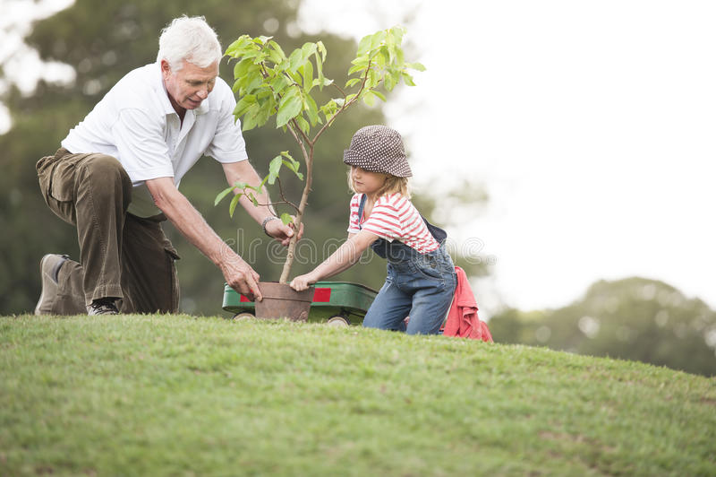 Farfadern och barnet som planterar trädet parkerar in, familjsamhörighetskänsla fotografering för bildbyråer