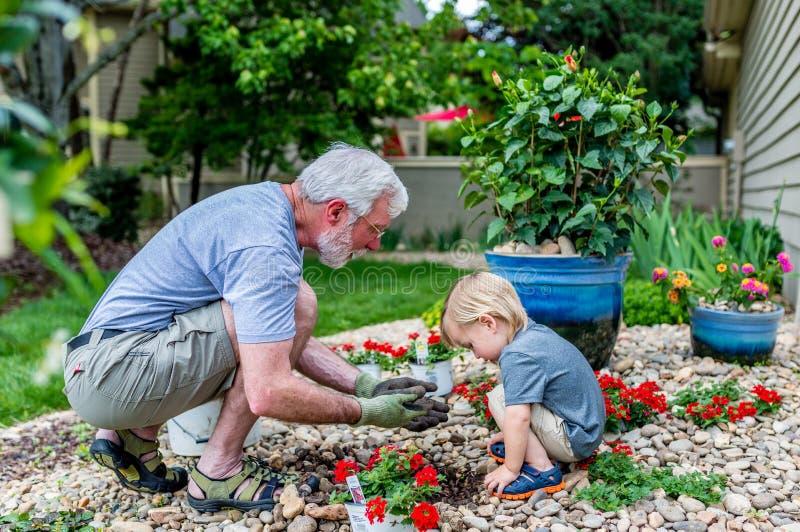 Farfadern och sonsonen spenderar Tid som planterar tillsammans blommor i trädgården royaltyfri bild