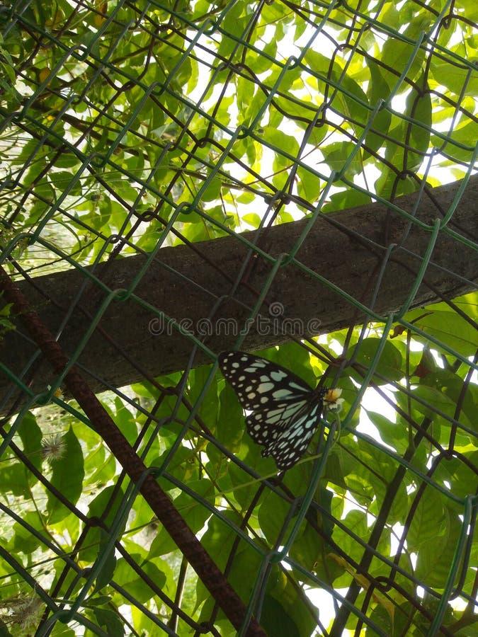 Farfalla immagine stock