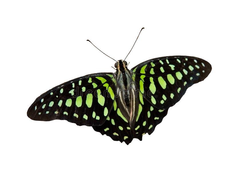 Farfalla 16 fotografia stock