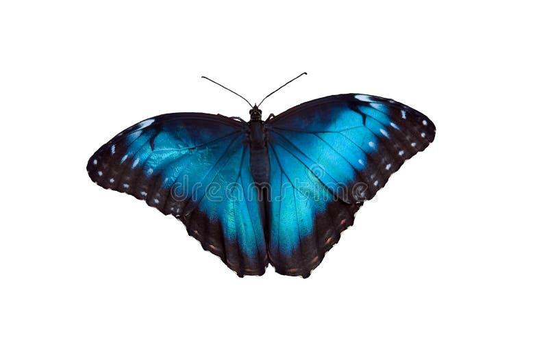 Farfalla 18 fotografie stock