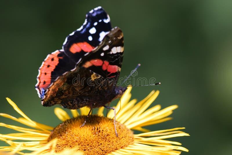 Download Farfalla fotografia stock. Immagine di verde, fiore, petalo - 216116