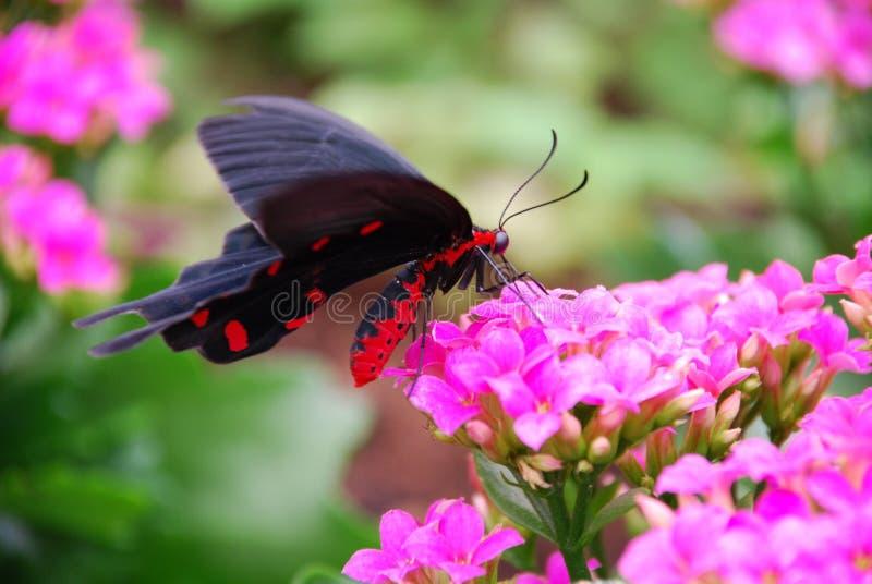 Download Farfalla immagine stock. Immagine di divertente, occhi - 3883817
