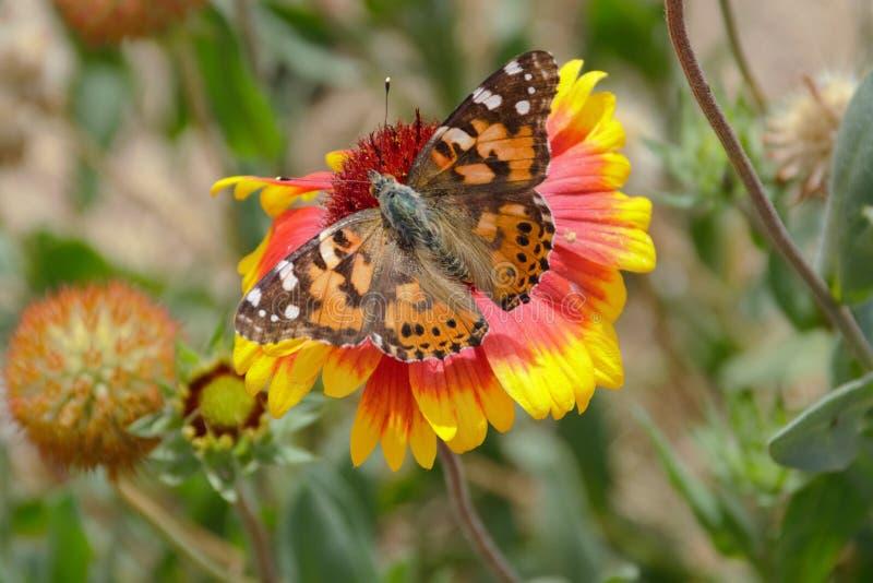 Farfalla 2 fotografia stock