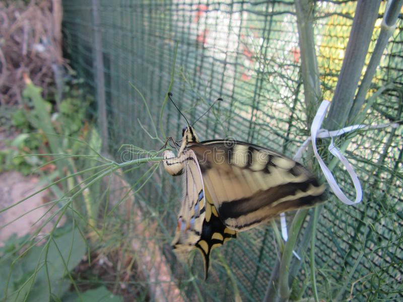 Farfalla stock afbeeldingen