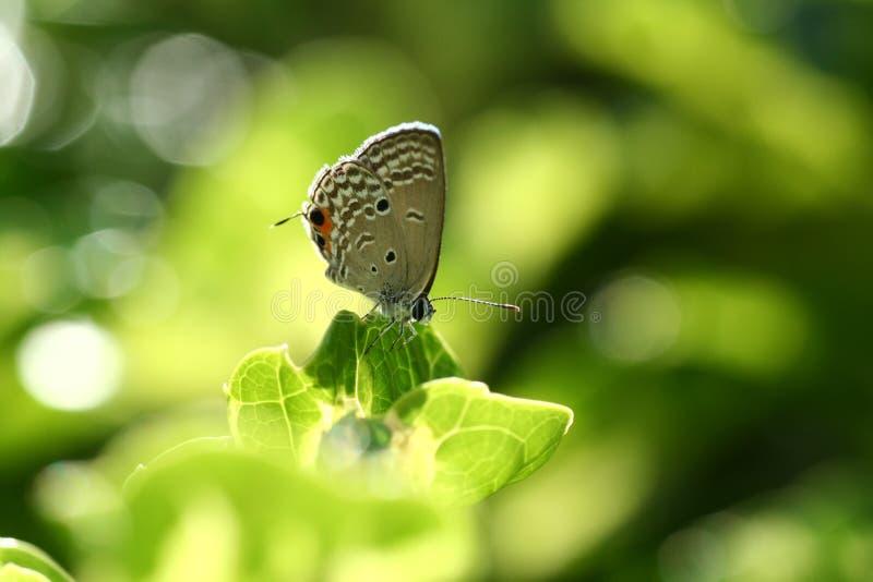 Farfalla al sole fotografia stock libera da diritti