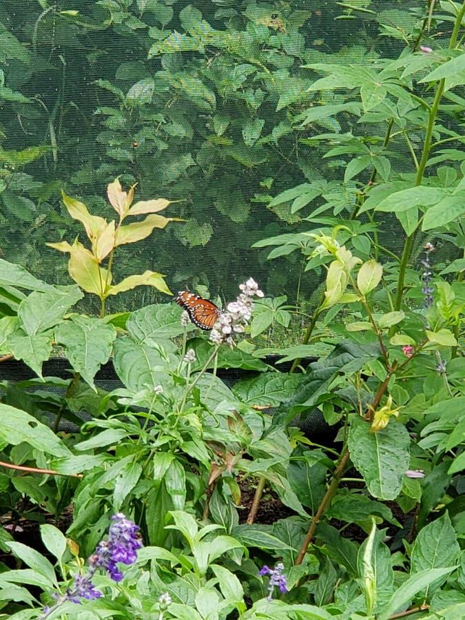 Farfalla allo zoo fotografie stock