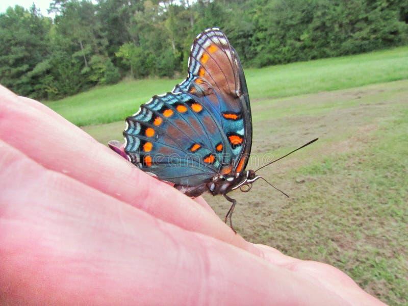 Farfalla amichevole fotografia stock libera da diritti