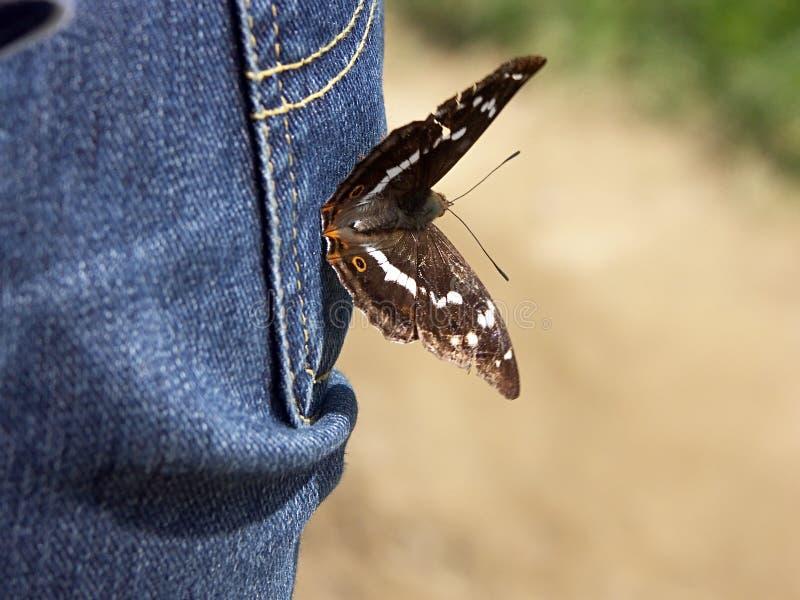 Farfalla amichevole immagini stock
