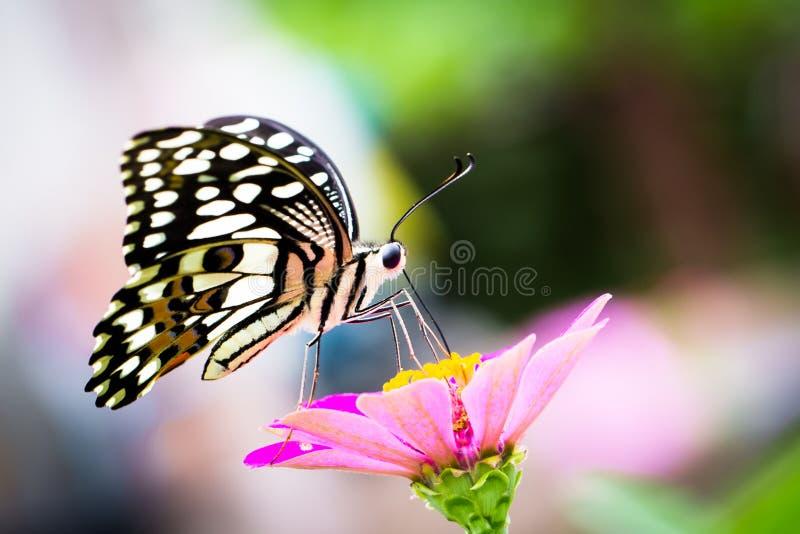 Farfalla appollaiata su un fiore fotografia stock