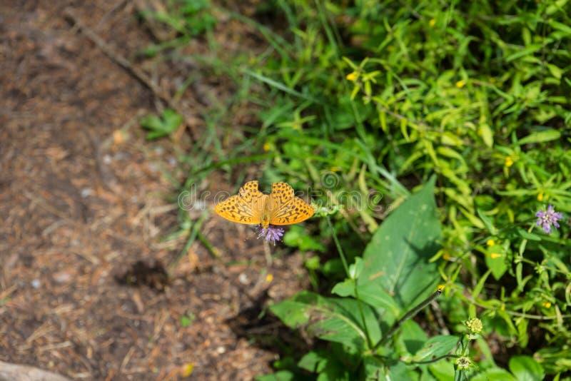 Farfalla arancio nella foresta immagine stock libera da diritti